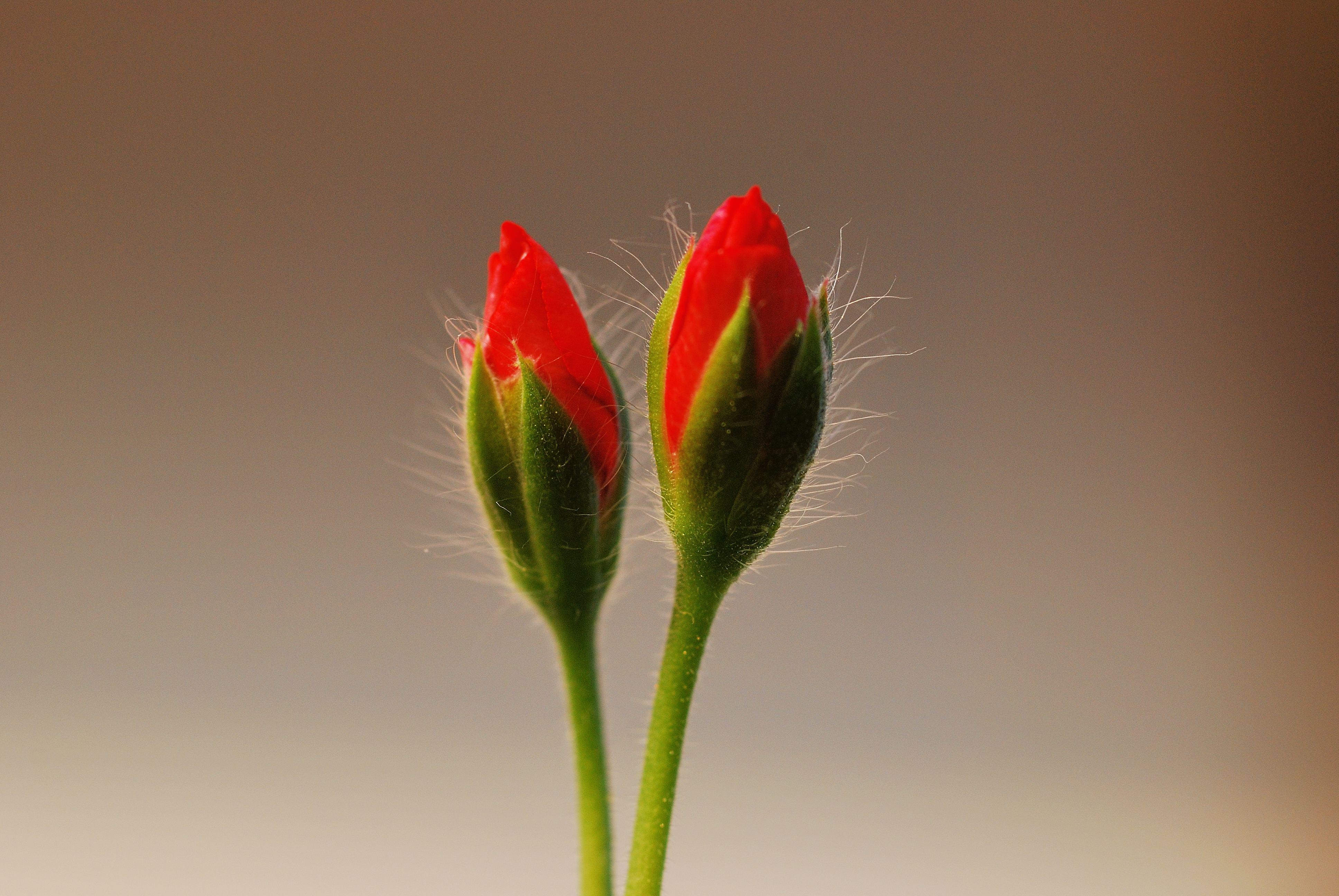 Nacque una volta / un fiore (Alessandro Stoppa)