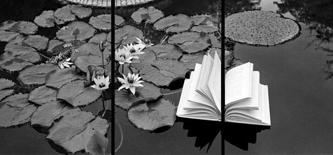 Lecciones-de-botanica1